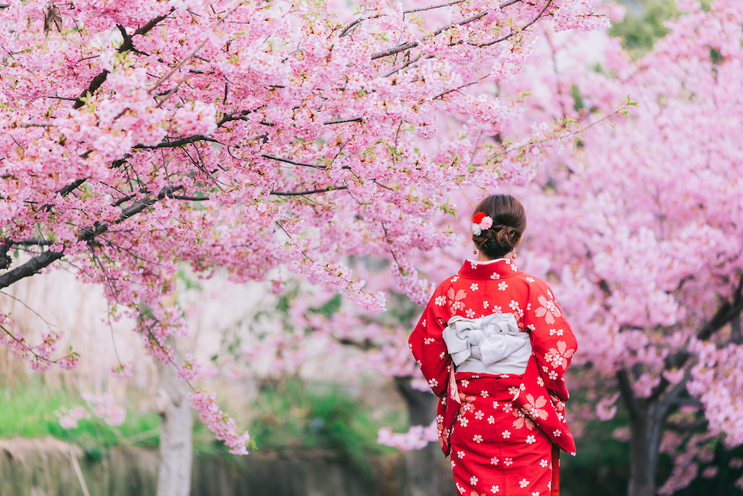 cherry-blossom_Japan_cruise_Blondes
