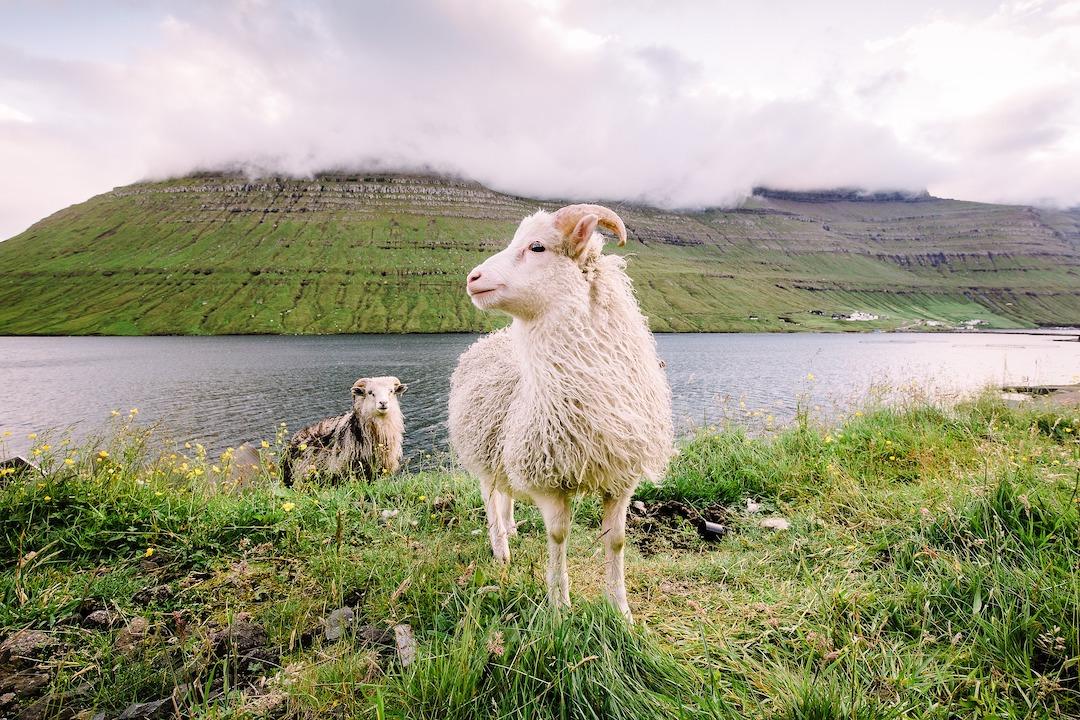 Faroe_Islands_Cruise_Blondes_James_Bond