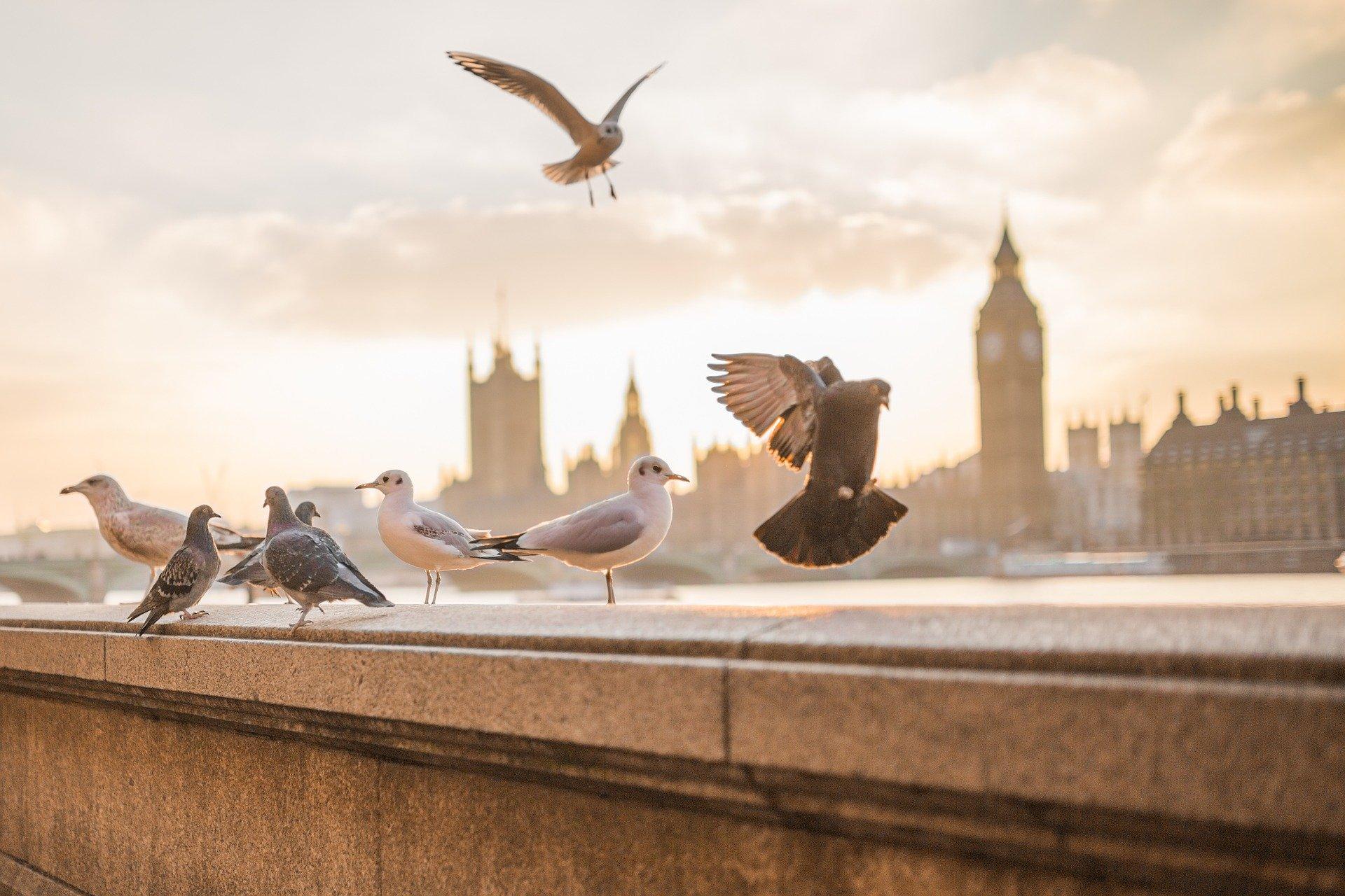 London_Parliament_Big_Ben_James_Bond_Criuise_Blondes